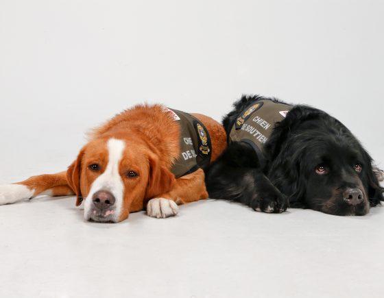 Photo des chiens Kevlar et Sundae